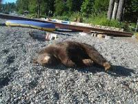 Who killed Sunny the bear?
