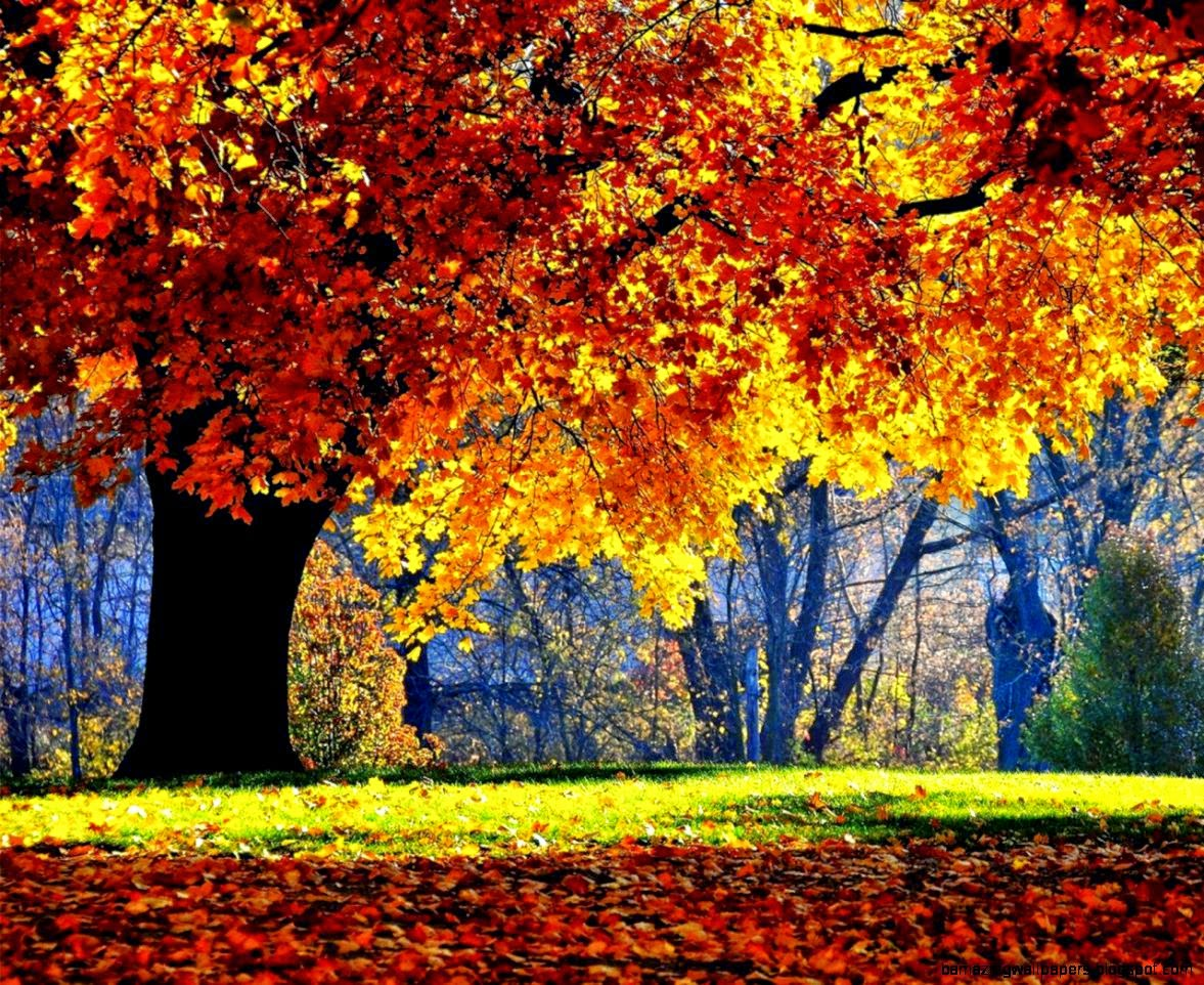 1280x1024 Autumn Forest Trees Wallpaper