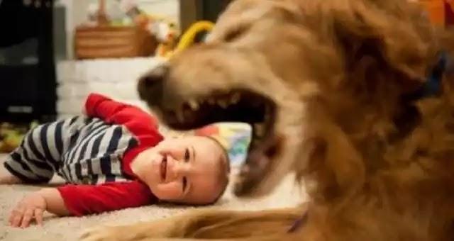 Πατέρας αποκοιμήθηκε μεθυσμένος και ο σκύλος κατασπάραξε το παιδί του
