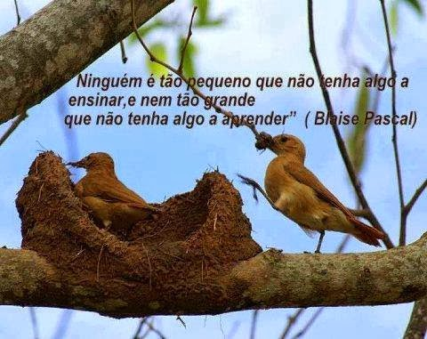 Minha citação preferida!