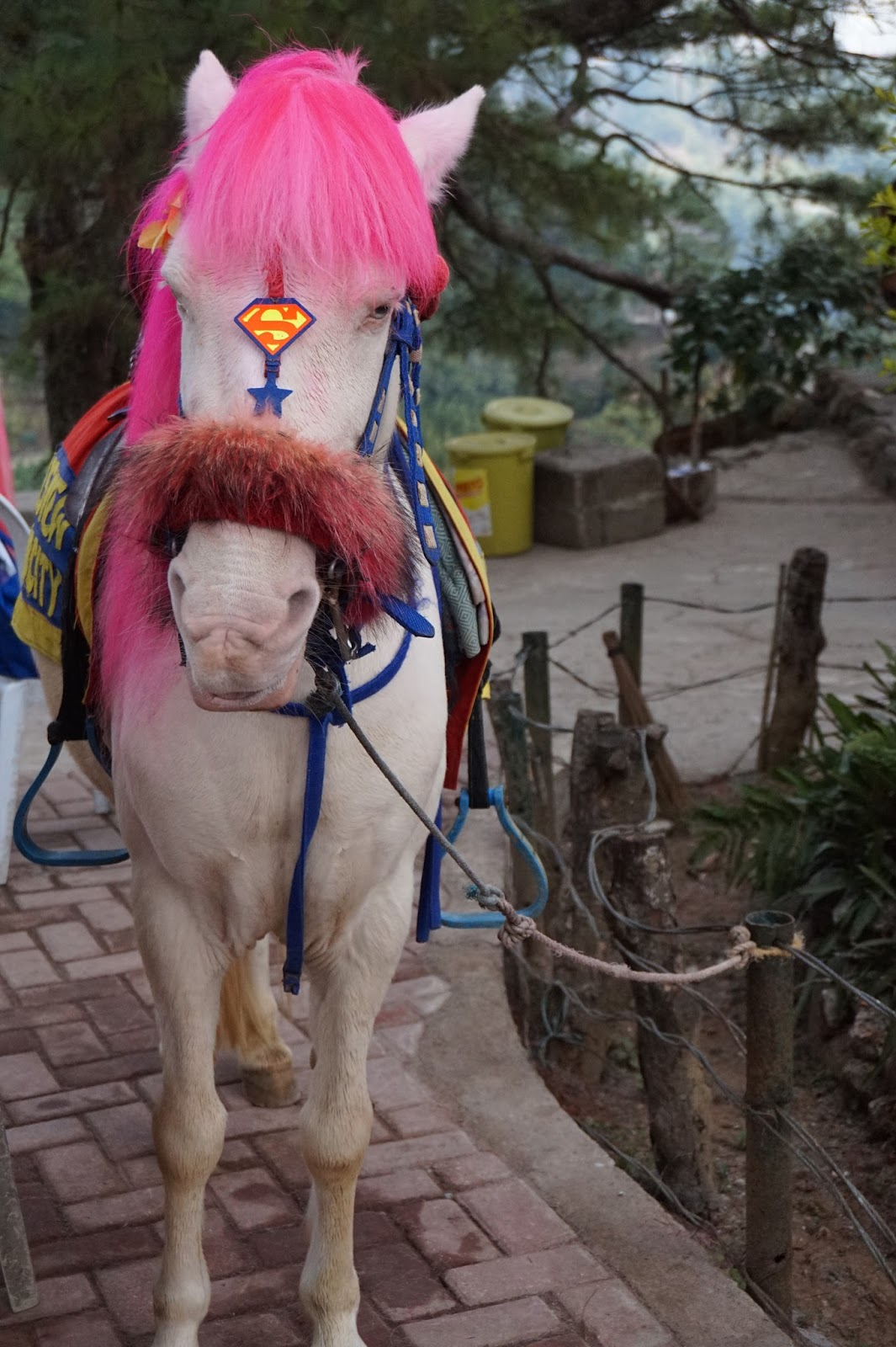 Horse with Pink Hair