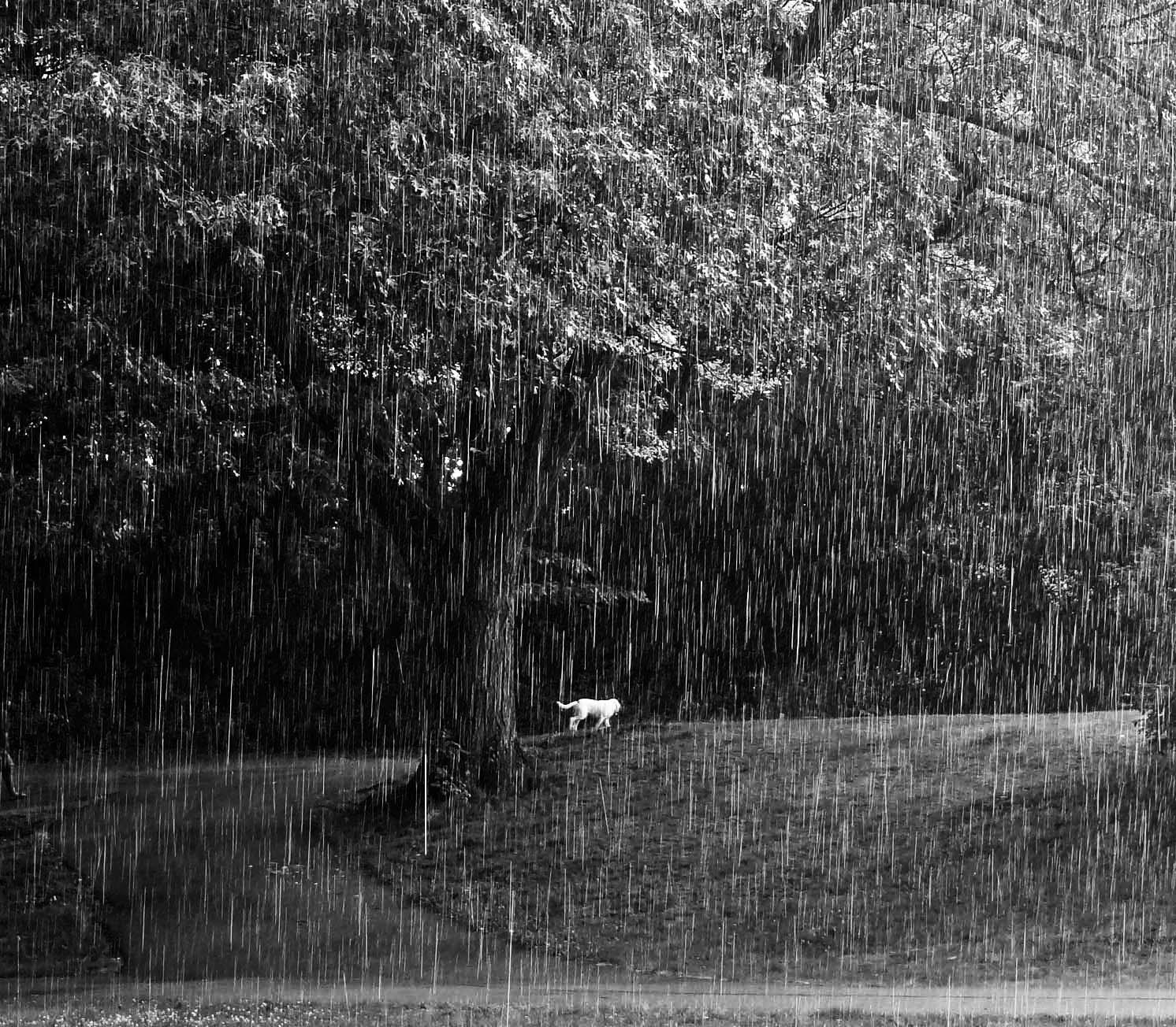 analysis of before the rain