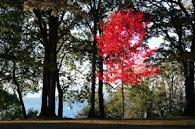 Vanier Park