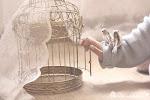 A veces preferimos no ser libres, sino vivir encerrados en una jaula de oro que nos encierra, sí, p