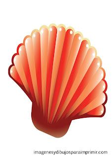 Concha con colores rojos  Conchas de mar para imprimir