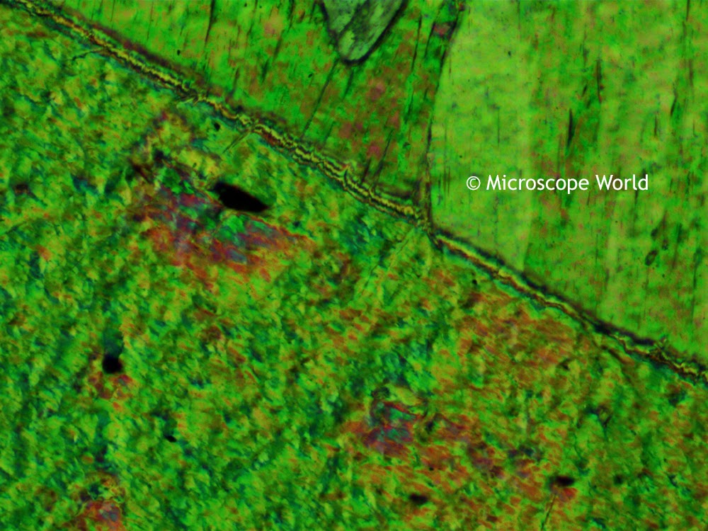 Polarizing microscope image of tremolite at 100x.