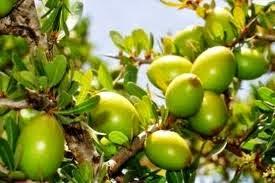 L'huile d'argan: Une huile indispensable