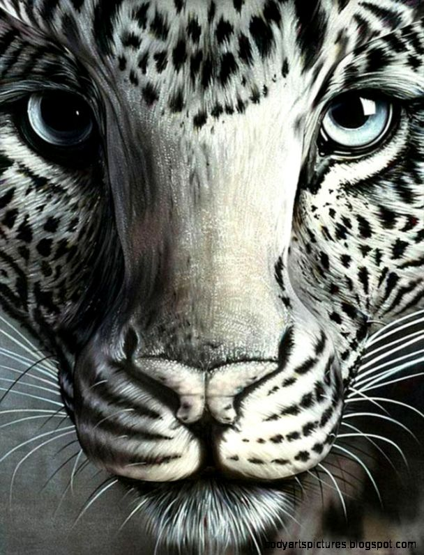 Body Camouflage tigre blanco y negro  maquillar  Pinterest