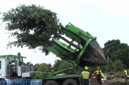 lori khas pindahkan pokok besar