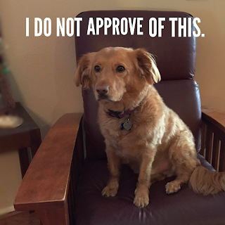 judge dog judges disapprovingly