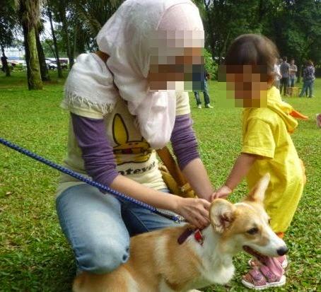Program I Want To Touch A Dog, kempen Saya Mahu Sentuh Anjing, kempen pegang anjing, Program I Want To Touch A Dog Langgar Persetujuan MAIS, gambar sentuh anjing