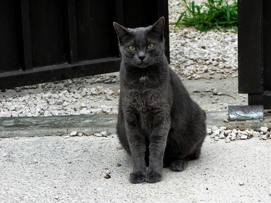 Cat from Olonzac, France