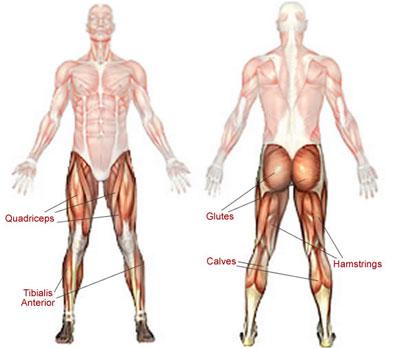 muskelgrupper træning