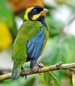 Foto: aves del Valle del Cauca colombia