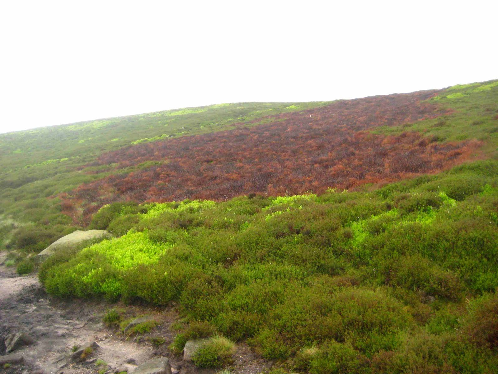 Moorland on Kinder Scout plateau, Derbyshire