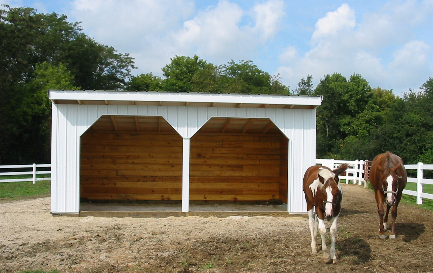 Only equine for Horse shed