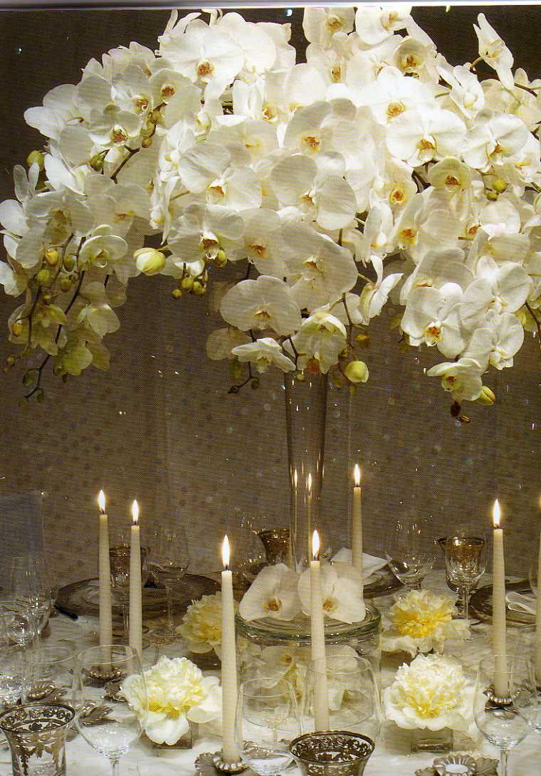 Mutuo prestiti collette proviamo con lo sponsor for Costo orchidea