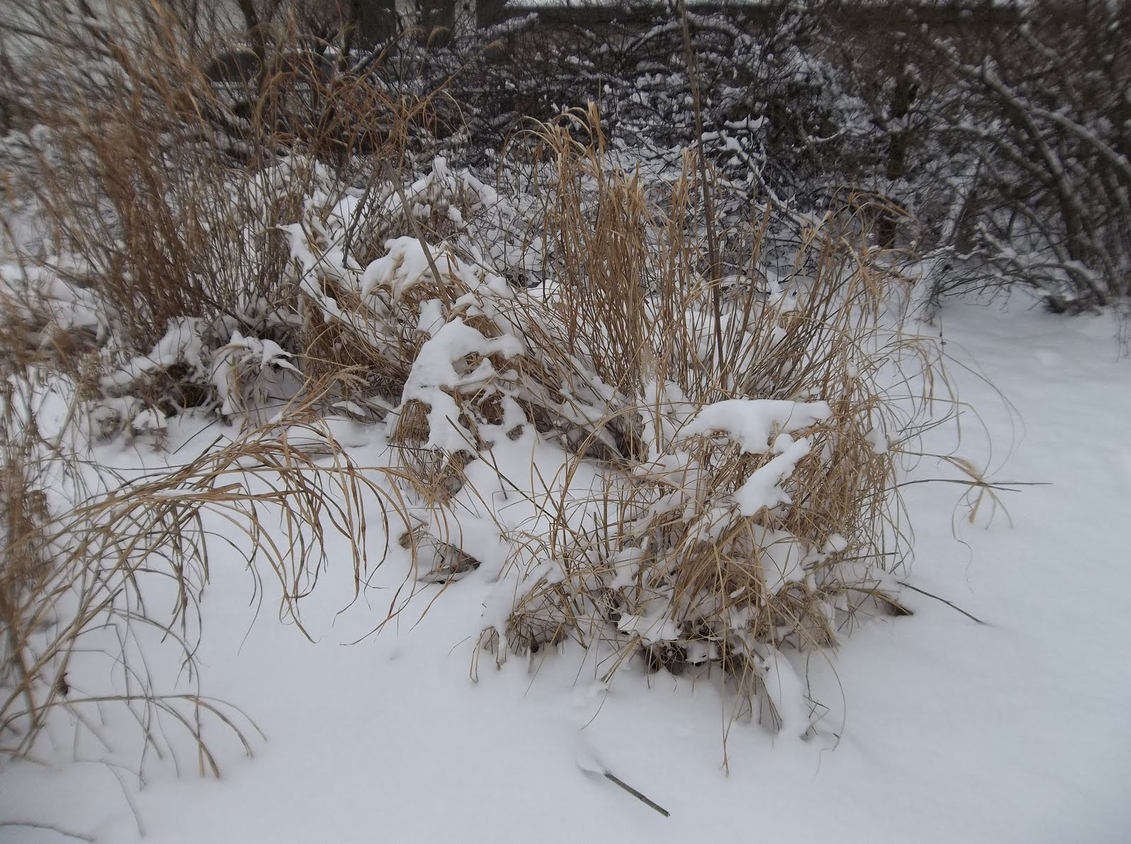the perennial agriculturalist winter in the backyard