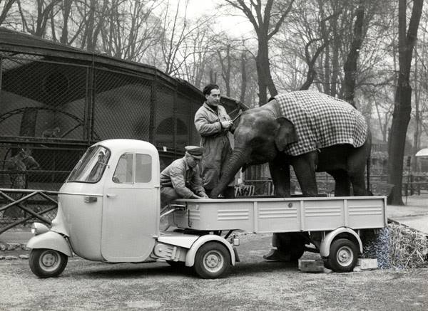 Elephant rentals, Have Trunk Will Travel, Inc. Transportation