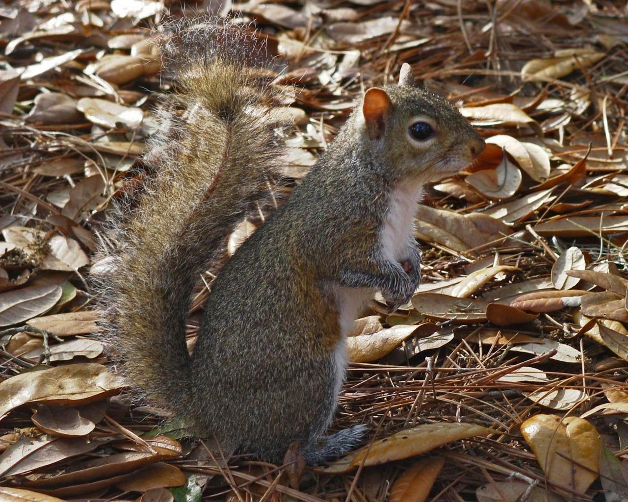 صور سنجاب Squirrel Pictures See A Picture