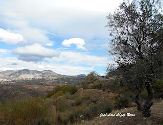 Sobre los olivos y la tristeza, tristeza, Granada, paisaje, quotes, reflexiones, ilusión, José Luis López Recio, joselop44,