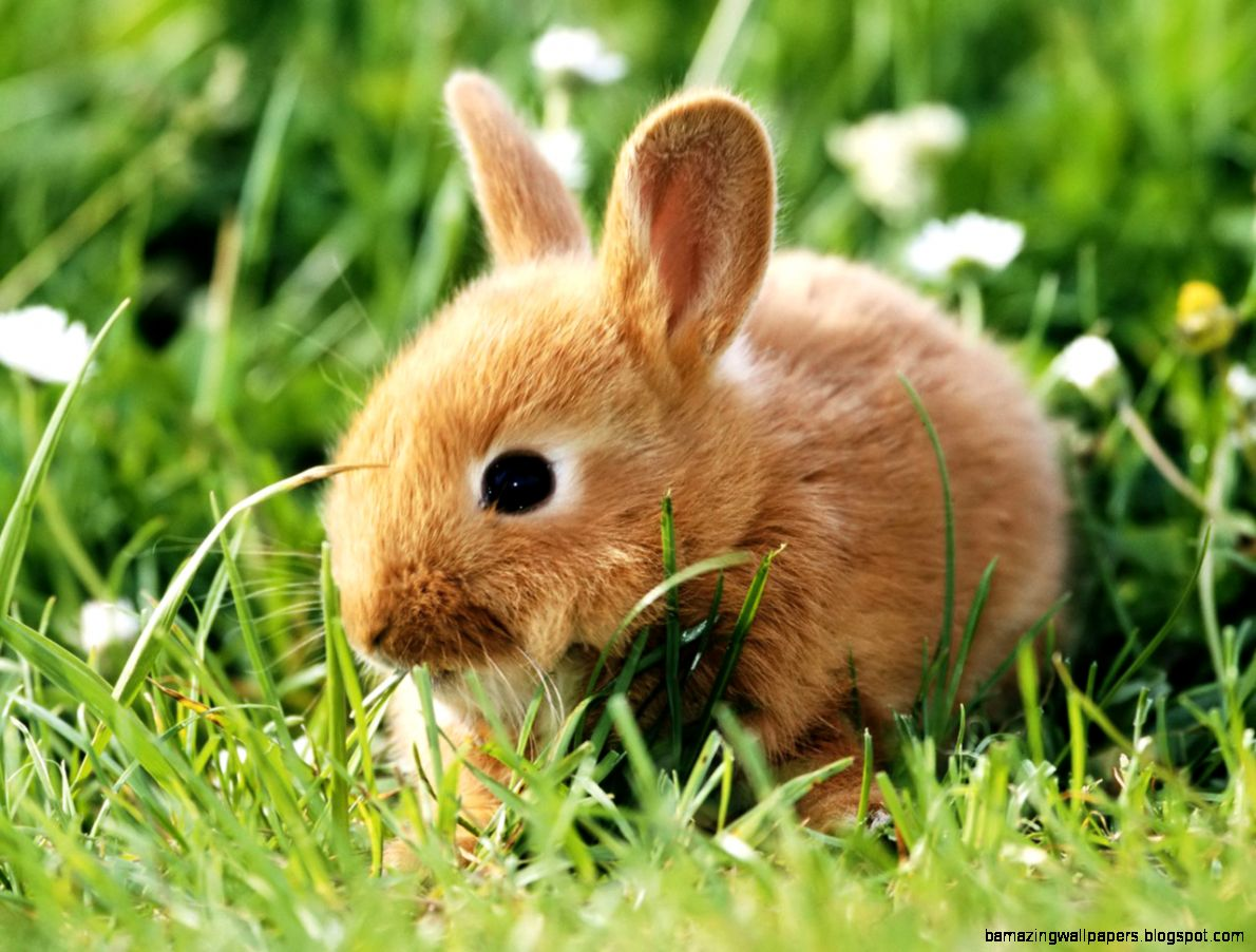 Rabbits Wallpaper   Cute Rabbits Animal Wallpapers Gallery