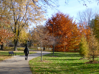Man walking along Waterfront Trail among brightly coloured leaves of red and gold, in BRGardens, Port Credit.