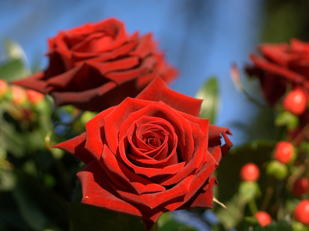 Wallpaper download dil - 90 Wedding Red Rose Flower Wallpapers Love Roses Pictures Urdu Meaning Pictures Hindi Tips Islam Books Information