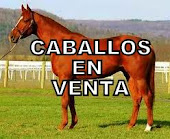 CABALLOS EN VENTA