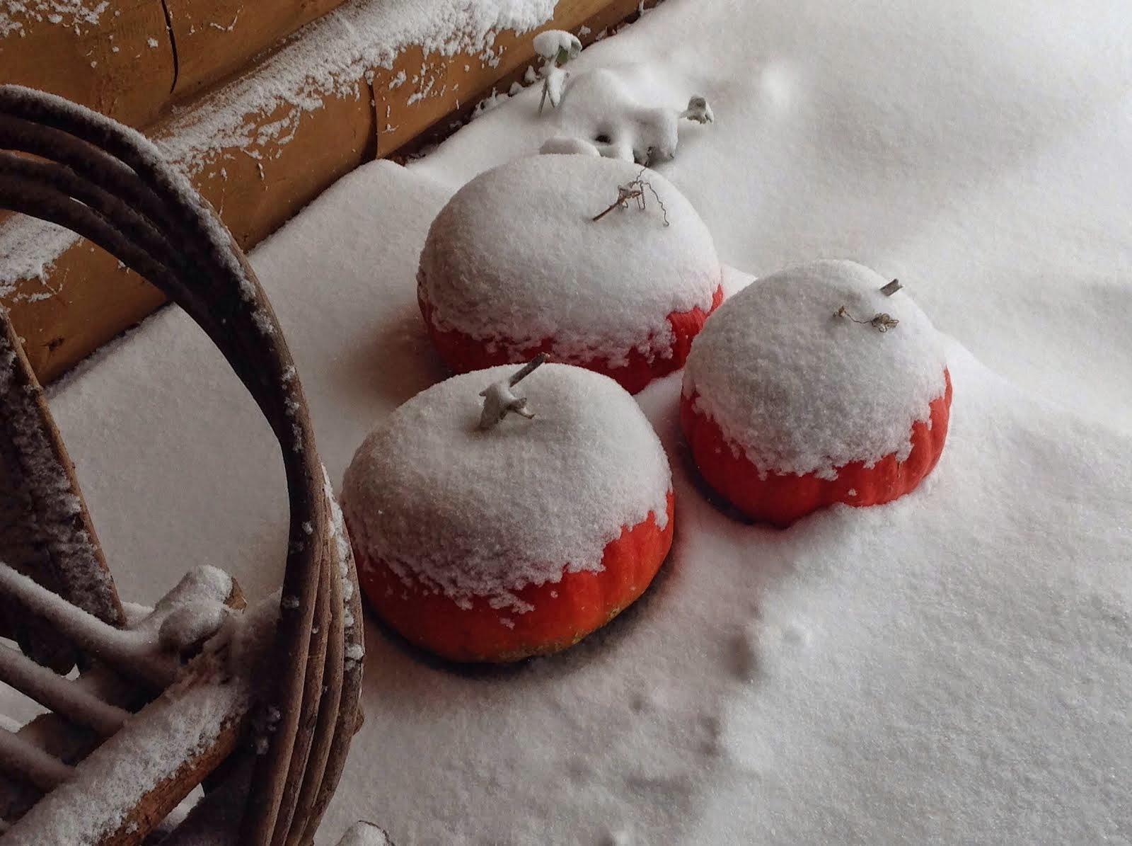 Frosted pumpkins