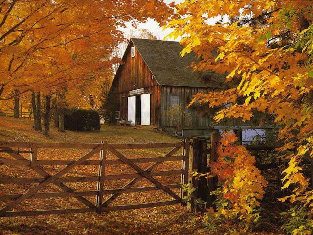 Autumn Harvest Wallpapers4