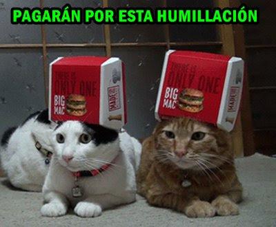 foto-meme-gatos-anuncio-humillacion