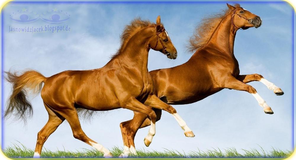 Piękno harmonia gracja i wolność biegnących Koni