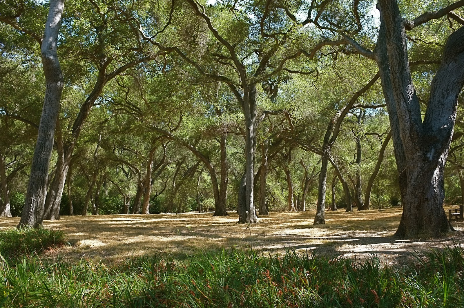 Passage Paradis: Descanso Gardens - In L.A. We are Spoilt for Choice