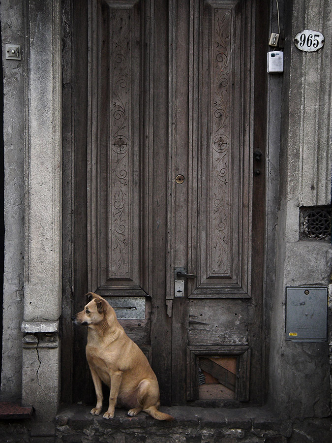Notes from the Pack - a dog blog. Photo of dog waiting for his owners to come, by Nir .B.