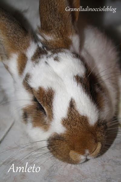 Amleto il mio coniglione