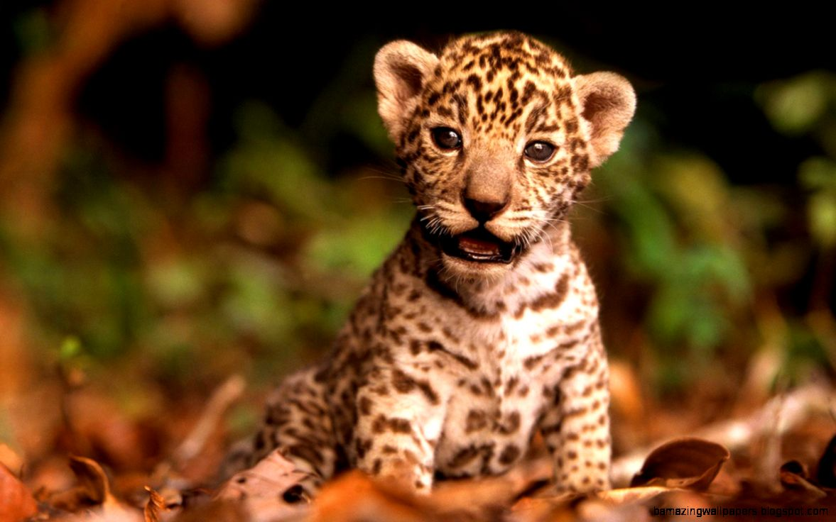 Baby Wild Animals Wallpaper   ImageSelect