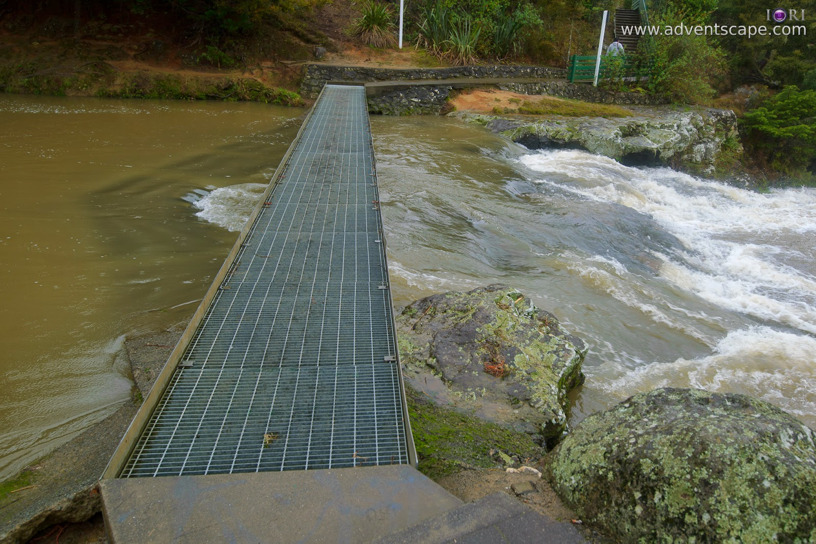 Philip Avellana, adventscape, iori, Whangarei falls, waterfalls, North Island, New Zealand, travel, tour, places to visit, landscape, nature photos, metal bridge, safety rails