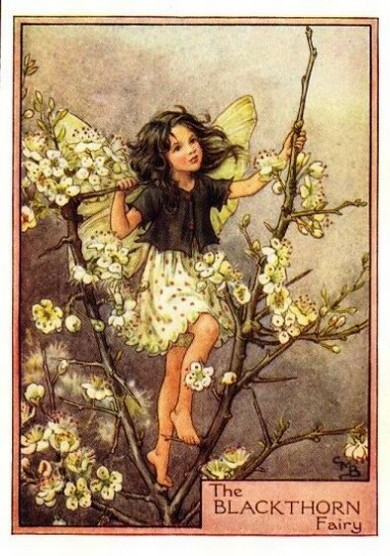 Another Of My Favourites Is The Blackthorn Fairy She Should Shortly Be Earing In Our Hedgerows Bringing With Her Winter