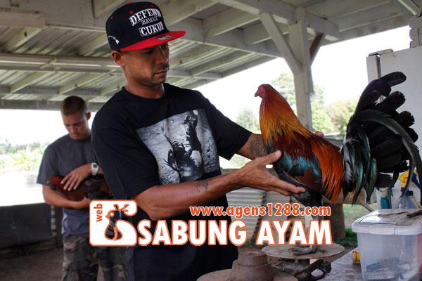 Hasil Pertandingan Arena AM4 Sabung Ayam S1228.net 07 November 2015