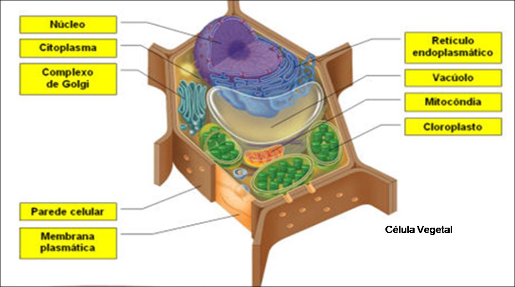 Ciencias Naturales 4to primaria: Los organelos de las células y sus ...