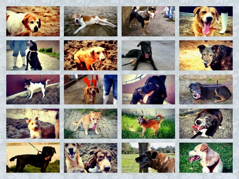 Cães Veterinários no Facebook