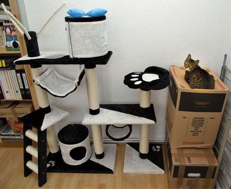 Кот в недоумении от нового гаджета