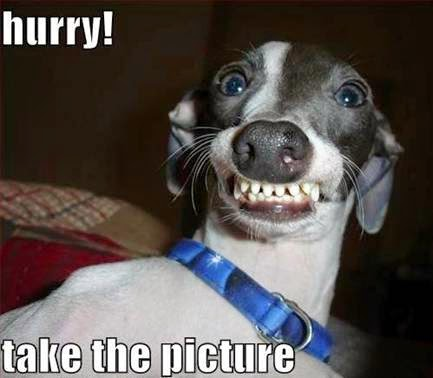 Hurry! Take the picture. Scary dog meme