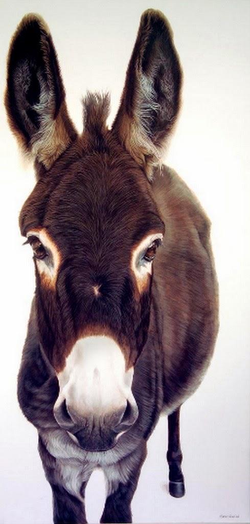cuadro-de-burro