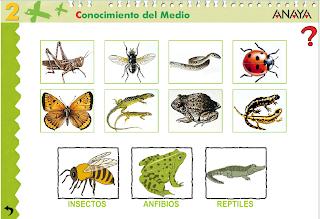 http://www.ceipjuanherreraalcausa.es/Recursosdidacticos/SEGUNDO/datos/03_cmedio/03_Recursos/actividades/03/act6.htm