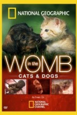National Geographic – In The Womb – Cats 2009 Documentary Movie Watch Online