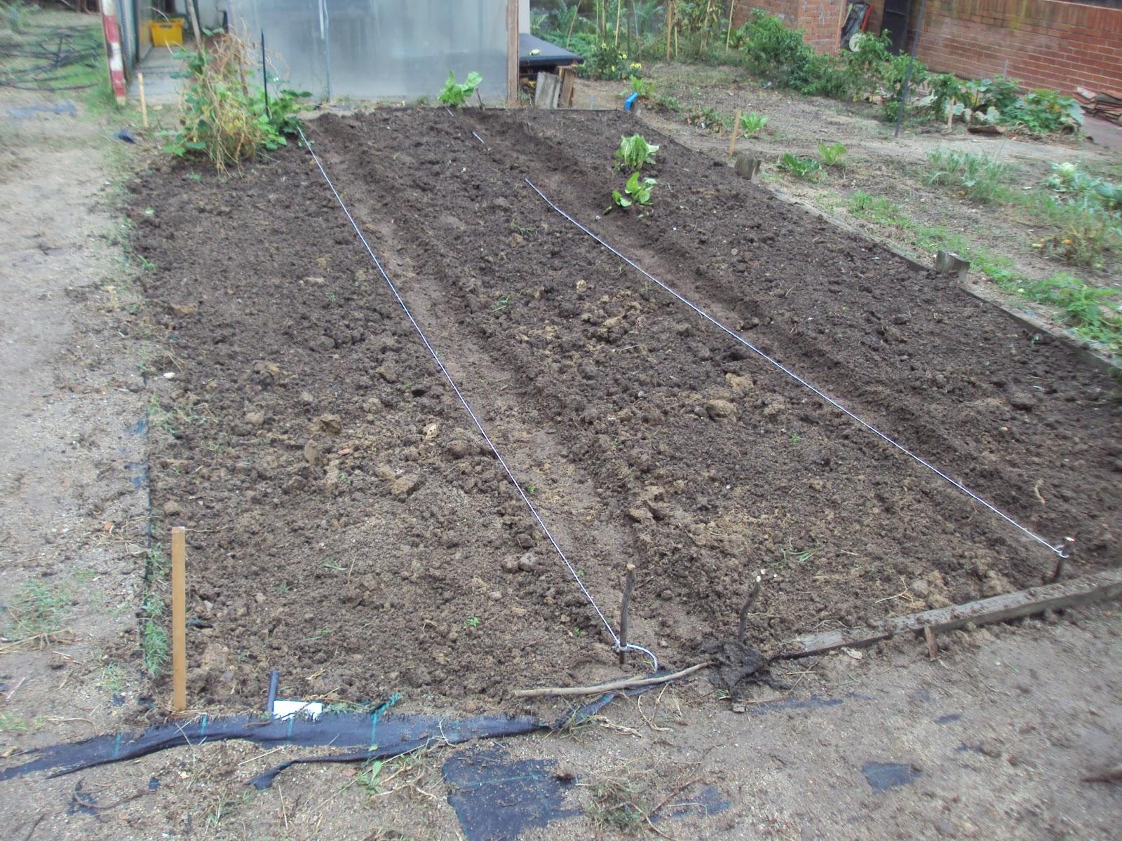 En torno al huerto los cultivos de invierno en el huerto for Preparar el huerto en invierno