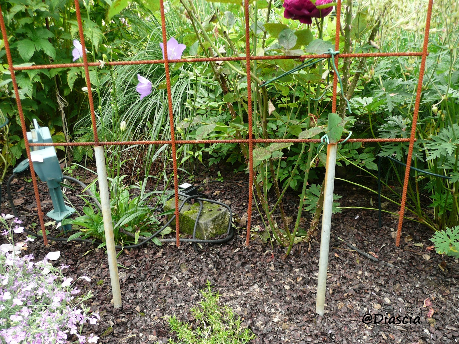 Le jardin de diascia juin 2012 - Support pour rosier grimpant ...