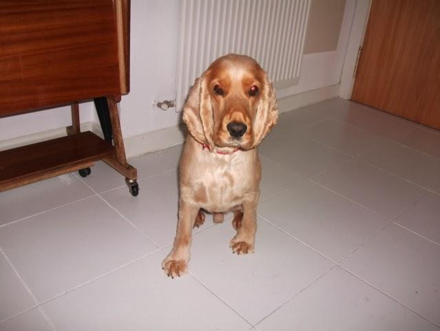 canguro de perros madrid